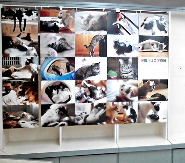 金松堂書店2階 「赤坂ねこ親会」保護猫写真パネル